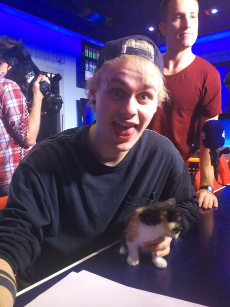 5sos kittens we dare you not to click this photo
